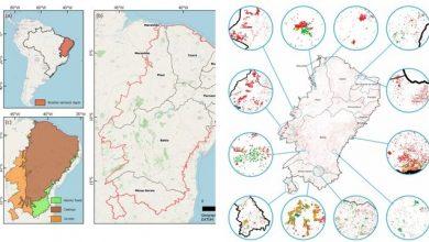 Photo of Semiárido ameaçado: vegetação perdeu 26,96% de cobertura em 18 anos, diz estudo da UFPB