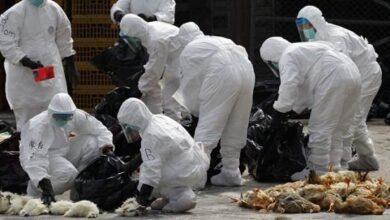 Photo of Primeiros casos da cepa H5N8 de gripe aviária em seres humanos é identifica na Rússia