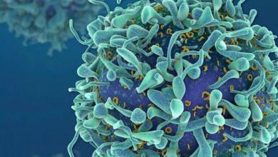 Photo of Cepa britânica pode ser mais letal que vírus original, afirmam cientistas