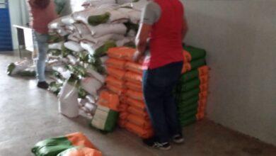 Photo of Prefeitura de Itaporanga em parceria com a Empaer realiza distribuição de sementes milho, feijão e sorgo  para os agricultores